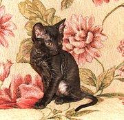 Уральский рекс-редкая порода кошек.