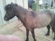 Продаю                            пони