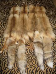 продам шкуры Сибирской рыжей лисы.