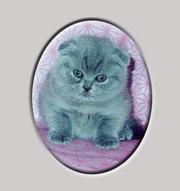 Вислоухие котята доставка по Москве