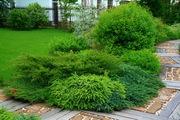 Озеленение недорого