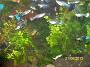 Аквариумные растения. Набор 16 видов 36 растений.