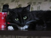 Черная кошечка Парма ищет семью!
