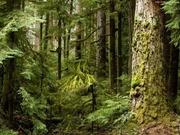 продам лес кругляк пиловочное бревно хвойных пород продам лес кругляк