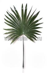 Пальмовые ветки и листья