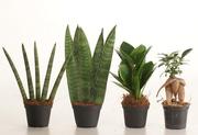 Стильные мини-растения для дома и офиса