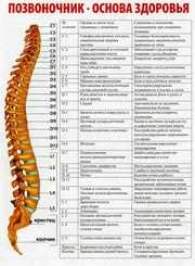 Лечение спины,  межпозвонковых грыж,  болезней