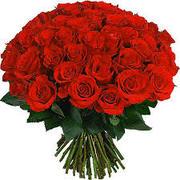 Розы цветы оптом, свежесрезанные розы, из Эквадора