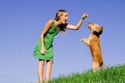 Ветеринарные товары по самым выгодным ценам
