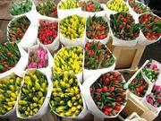 Продаем живые цветы оптом. Розы,  Тюльпаны. Доставка РФ. Жми!