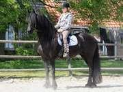 Фризская порода лошадей отличается динамизмом и,