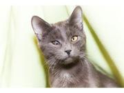 Котенок Маша в дар