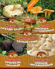 Продаю мицелий (семена) грибов