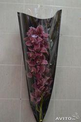 Ветка орхидеи цимбидиум с доставкой в Москве