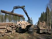 Лес на корню 120 000 куб.м./год,  x 43 года