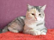Кошка-крошка Ума