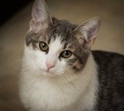 Совершенно необыкновенный котик Штирлиц,  5, 5 месяца