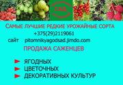 Саженцы клубники почтой -лучшие сорта  из питомника Белоруссии