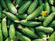 Овощи из Кубани (Адыгея)