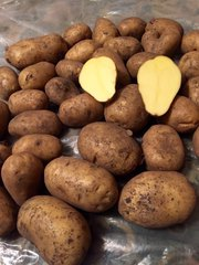 Картофель оптом +5 от производителя