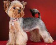 Профессиональная стрижка и уход за шерстью собак и кошек у вас дома.