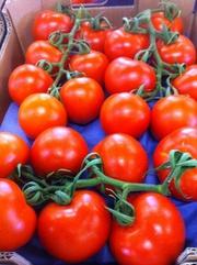томаты, огурцы, перец, баклажан из Испании