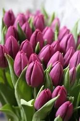 Тюльпаны к 8 марта по антикризисным ценам.