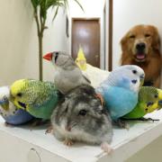 Питомник разведения попугаев,  канареек - 8 926 268 86 58