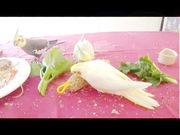 Корелла попугаи способные к разговору и общению птицы.
