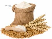 Продам пшеницу 4 класса мягкого сорта,  муку ,  Казахстана Петропавловск