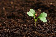 Оптовая продажа растительных удобрений