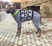 Одежда для Ксоло,  Перуанских голых собак и кхс