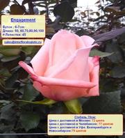 Эквадорские розы по цене плантаций с доставкой в Москву
