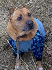 Собака из усыпалки - солнечная девчушка Калинка.