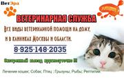 Ветеринарная помощь на дому и в клиниках.
