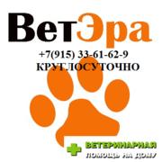 Ветеринарная Помощь на дому и в Ветеринарной клинике