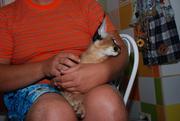 Элитные кошки для избранных - котята Каракала