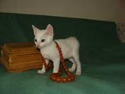 кудрявые котята уральский рекс