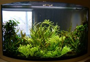 Обслуживаем,  чистим аквариумы с 2004г