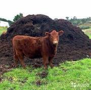 Коровий навоз в мешках купить с доставкой.