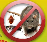 Качественное уничтожение клопов,  тараканов,  крыс.
