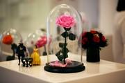 Живая роза в колбе: стоит от 5 до 10 лет! Доставим за 3 часа.