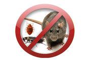Уничтожение клопов тараканов всех насекомых грызунов и паразитов в Москве