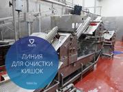 Автоматическая линия для обработки кишок КРС Feleti от производителя!