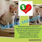 Кому кошачий энерджайзер ? Рыже-белый котенок ищет Добрых хозяев.