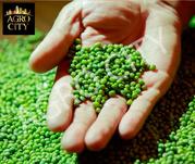 Маш зеленый (бобы мунг)