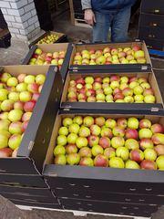 Предлагаем белорусское яблоко от производителя