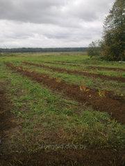 Готовый сельскохозяйственный бизнес «под ключ»