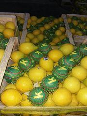 овощи и фрукты из Турции с плантаций на прямую без посредника