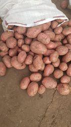 Продовольственный картофель Беларусь, Гомель оптом 5+ 6, 5р от КФХ